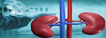 زراعة الكبد